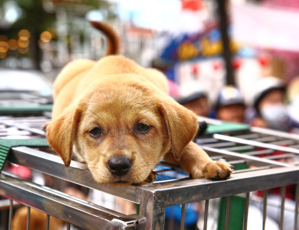 The dog food and accessories market are big business in the UK