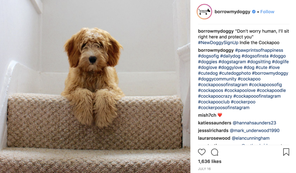 One of the dogs featured on the BorrowMyDoggy Instagram page.