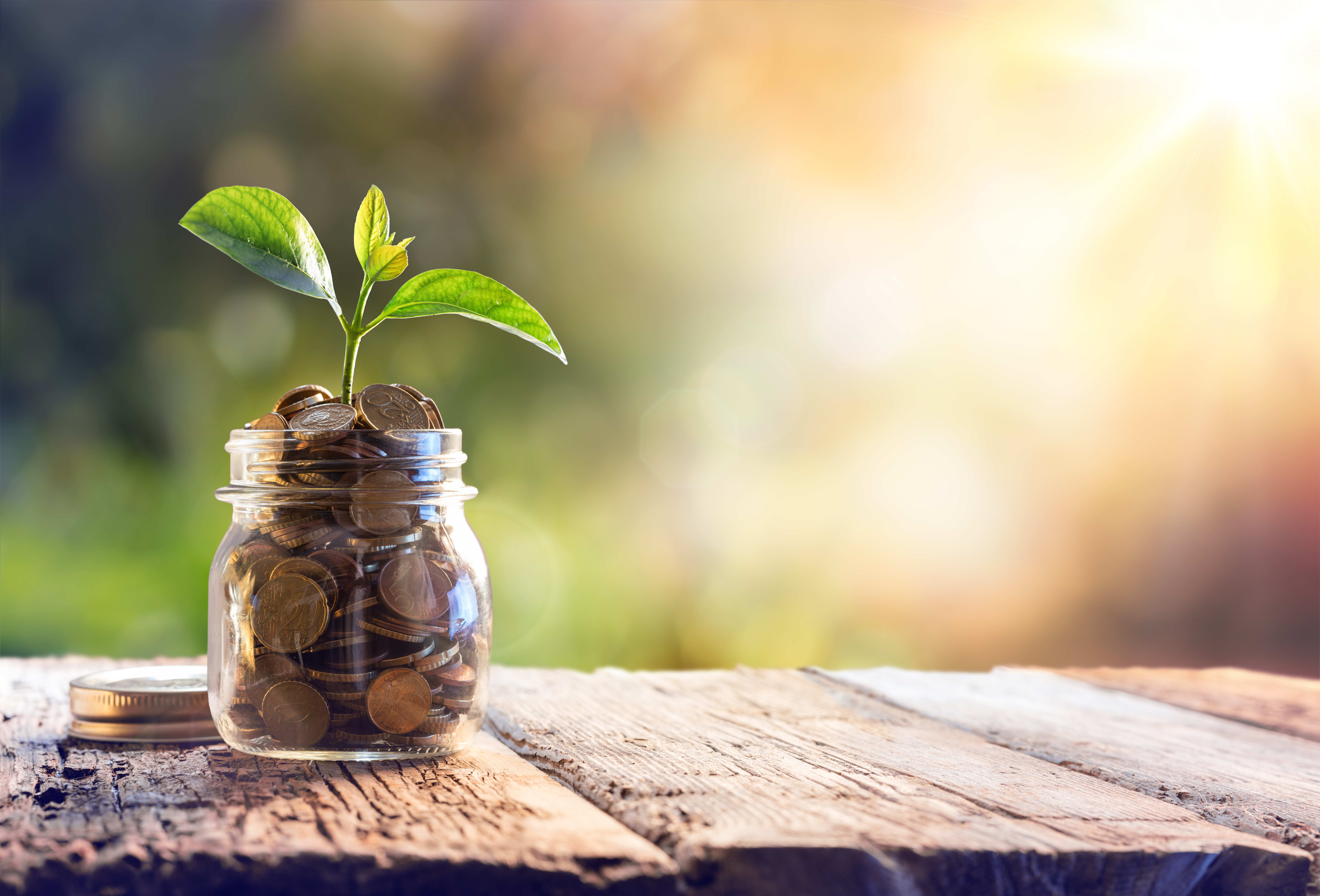 In Search Of The Safest Place To Plant A Fast Growing Money Tree