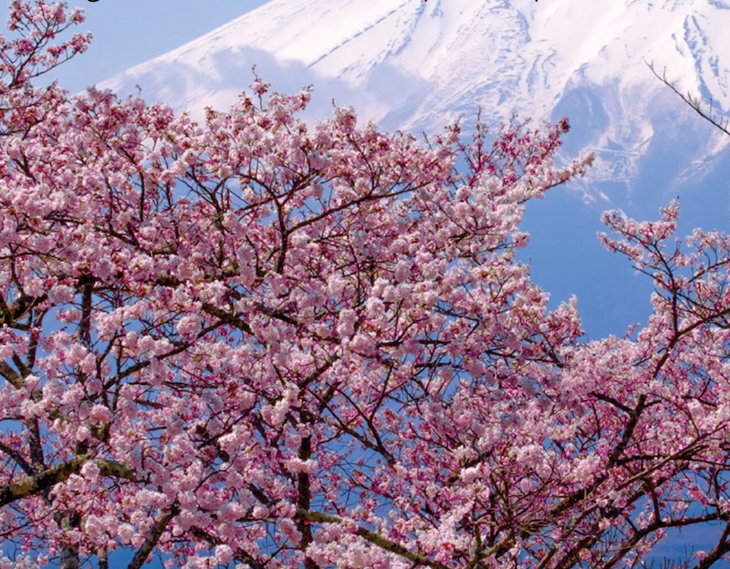 Is Japan set to blossom